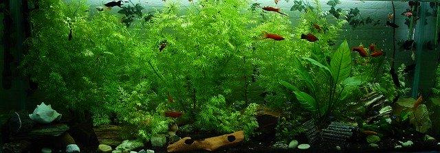 Aquarium einrichten - So kann Ihr Amazonas Becken aussehen.