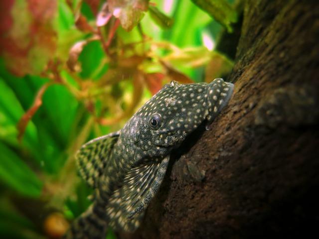 Aquarium Wurzel